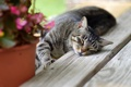 Картинка кот, вазон, лапа, спит, ступеньки, лежит, кошка