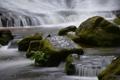 Картинка поток, камни, река, пороги