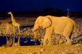 Картинка слон, жираф, Африка, водопой, Намибия, Etosha National Park