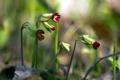 Картинка природа, трава, цветы