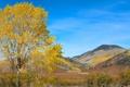 Картинка осень, небо, горы, дерево