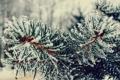 Картинка зима, елка, снег, ветка, иголки
