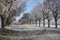 Картинка зима, иней, снег, деревья, Природа, аллея