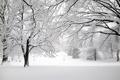 Картинка зима, снег, деревья, ветки, природа, парк