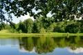 Картинка листья, деревья, ветки, пруд, парк, утка