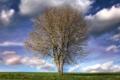 Картинка весна, трава, небо, природа, поле, цвет, дерево