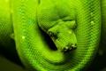 Картинка зеленый, змея, голова, чешуя