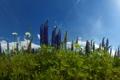Картинка трава, цветы, природа, фото, обои