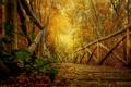 Картинка осень, лес, листья, деревья, природа, парк, HDR