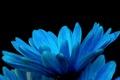 Картинка цветок, фон, краски, лепестки