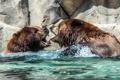 Картинка вода, природа, медведи