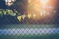 Картинка листья, ограда, забор, листики