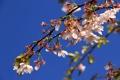 Картинка весна, небо, фруктовое, ветка, дерево, цветы