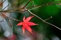 Картинка осень, природа, лист, цвет, ветка