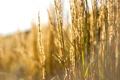 Картинка природа, свет, трава