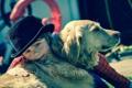 Картинка собака, шляпа, мальчик, друзья