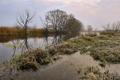 Картинка трава, река, вечер