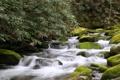 Картинка лес, река, камни, Tennessee, Теннесси, Гатлинбург, Gatlinburg