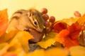 Картинка осень, листья, ягоды, веточка, орех, бурундук, autumn