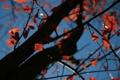 Картинка осень, небо, дерево, листья, обои, день, ветви