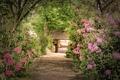 Картинка рододендроны, кусты, деревья, Photoshop, парк, тропинка