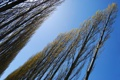 Картинка небо, деревья, аллея