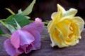 Картинка розы, доска, нежность