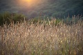 Картинка трава, свет, природа