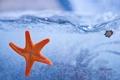 Картинка море, вода, морская звезда
