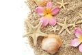 Картинка цветы, камешки, морские звезды