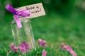 Картинка зелень, фиолетовый, трава, макро, цветы, природа, фон