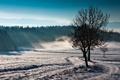 Картинка поле, пейзаж, природа, туман, дерево