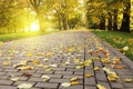 Картинка осень, плитка, листва, Autumn leafs, опадающая, свет, яркий