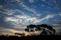 Картинка небо, облака, деревья, закат, силуэт