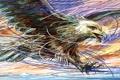 Картинка полет, птица, орел, цвет, крылья, вектор, штрих