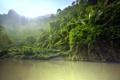 Картинка лес, река, тропики, джунгли, лучи солнца