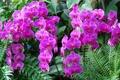 Картинка листья, орхидеи, экзотика