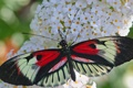 Картинка цветок, растение, узор, насекомое, бабочка, мотылек, крылья