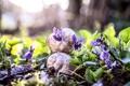 Картинка цветы, природа, улитки