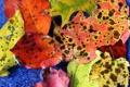 Картинка осень, листья, цвета