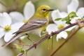 Картинка цветы, природа, птица, ветка, весна
