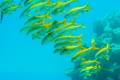 Картинка рыбы, косяк, море, океан