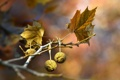 Картинка листья, макро, ветки, природа
