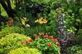 Картинка кусты, деревья, герань, сад, лилии, цветы