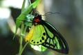 Картинка макро, растение, Бабочка