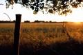 Картинка поле, солнце, лучи, закат, проволока, вечер, простор