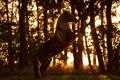 Картинка природа, фон, конь