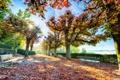Картинка осень, листья, деревья, улица