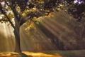 Картинка осень, лучи, свет, природа, парк, утро