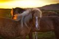 Картинка закат, кони, пастбище